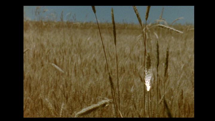 prairie fire loop_16mm wheat_oct6_11 copy